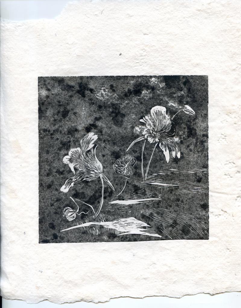 The Uppercase garden - Nasturtiums